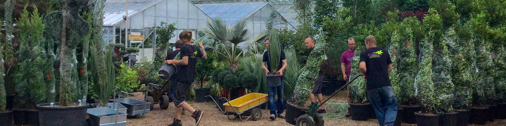 Big Plant Nursery Ecommerce Development & Website Design West Sussex