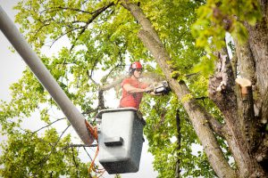 Treefirm WordPress Website Design & Development Sussex